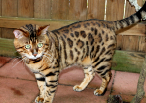 how to take care of feral cats in the winter